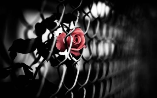 amor cautivo